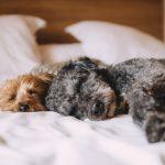 眠くなってきた…でも寝れない!眠い時に眠気を紛らわす方法まとめ